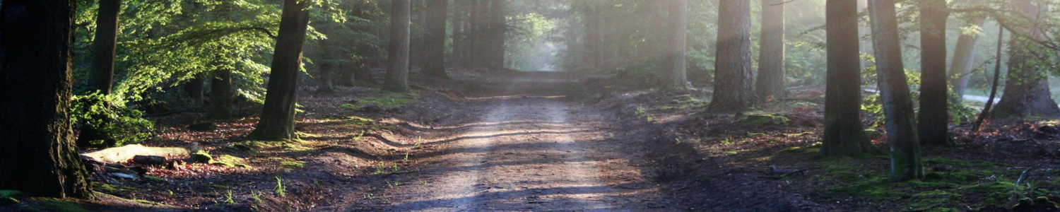 road-sun-rays-path-320-webdesign-bb